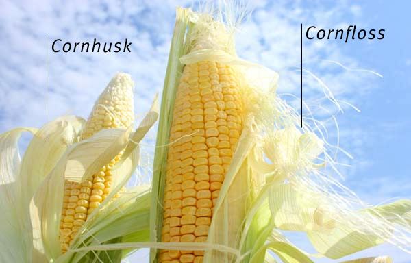 The Cornstalk Theory